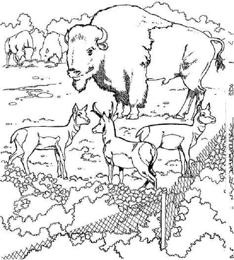 tundra coloring pages coloring home