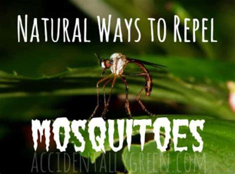 caroline thanh hương 5 ca ch trư mu 244 i 5 great ways to repel mosquitoes