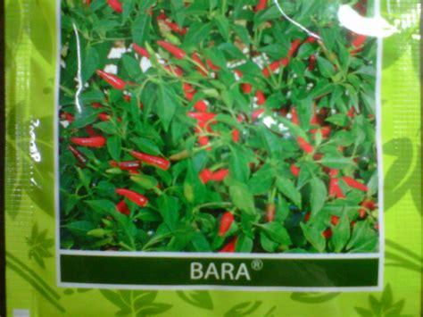 Bibit Cabe Rawit Bara july 2011 toko tani subur