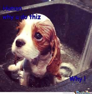 Sad Animal Memes - cute sad dog memes www pixshark com images galleries