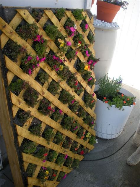 grow strawberries vertically pallet google search