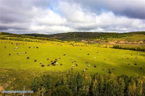 mongolia interior mongolia interior paisaje de pradera en hulun buir