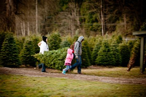 w6 pines christmas tree farm images of trees kent decoration ideas 2018