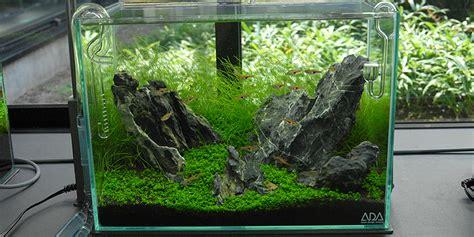 membuat aquarium aquascape mini need help with mini m fish aquascaping world forum