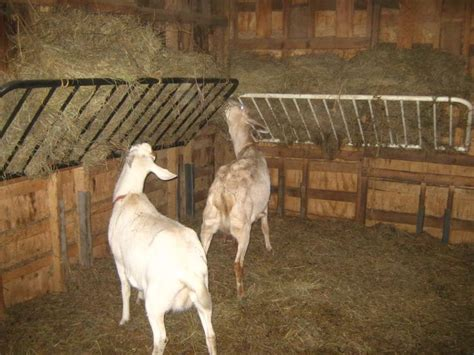 futon hay feeder 16 best ideas for goats images on goats goat