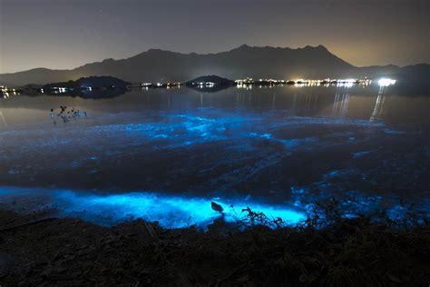 glow in the paint hong kong sea sparkle eerie blue glow hong kong blamed on
