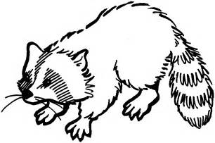 raccoon coloring page free raccoon coloring pages