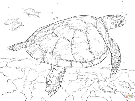land turtle coloring page turtle coloring pages for adults reaic sea grig3 org