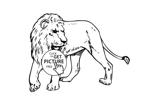 coloring pages animals realistic lion lion real animals coloring pages for kids printable free
