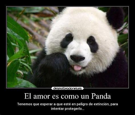 imagenes de amor para mi esposo gordito im 225 genes de amor de pandas imagui