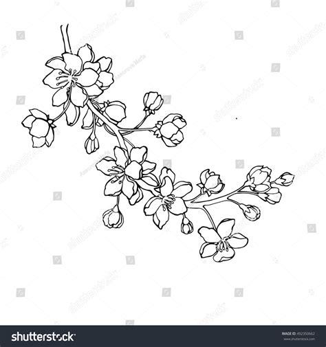 Cherry Blossom Branch Drawing Outline by Vector Illustration Designer Branch Japanese Lager Vektor 492350662