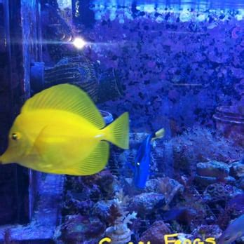 fish room raleigh the fish room 11 reviews pet stores 6119 capital blvd raleigh nc phone number yelp