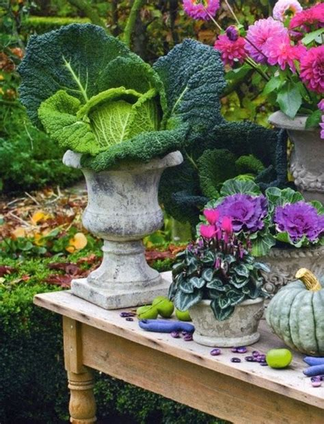 vasi per bulbi vasi in vetro per bulbi coltivati in acqua blossom zine