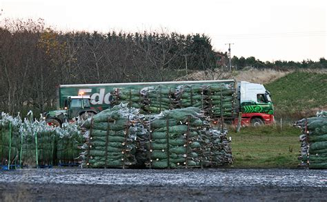 three day fulfilment target for 650 000 christmas trees
