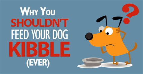 Adding Water To Puppy Food - kibble why it s not a option for your dogs