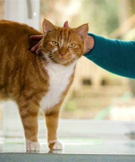 nicest breeds looking cat breeds www pixshark images galleries with a bite