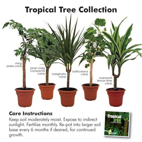 types of tropical house plants 38 best images about indoor tropical plants on