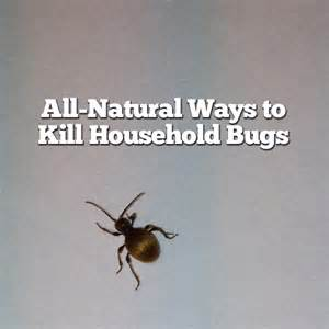 ways to kill household bugs