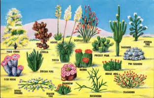 the taos unlimited blog high desert plants wildlife a taos unlimited blog series part 3