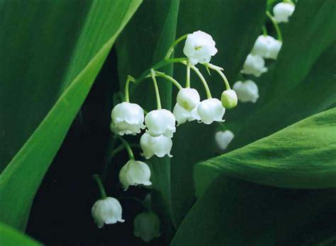 fiori simili alle eniscuola schoolnet