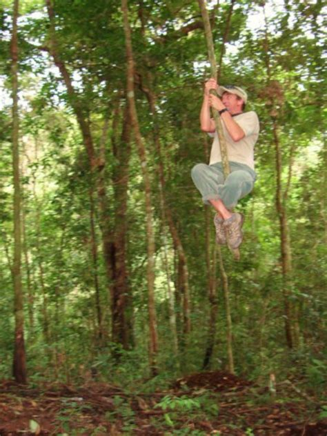 swing first vine tarzan swinging on a vine in the jungle photo