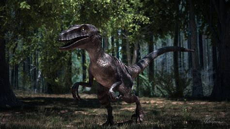 Raptor Background Check Raptor Wallpaper Dinosaur Www Pixshark Images Galleries With A Bite