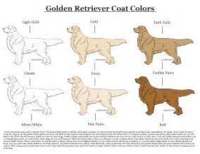what color are golden retrievers golden retriever coat colors by xlunastarx on deviantart