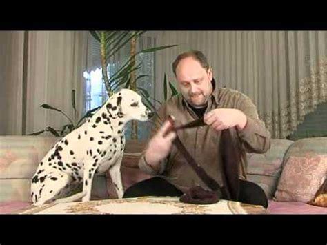 katzenhaare entfernen teppich tipp5 hundehaare