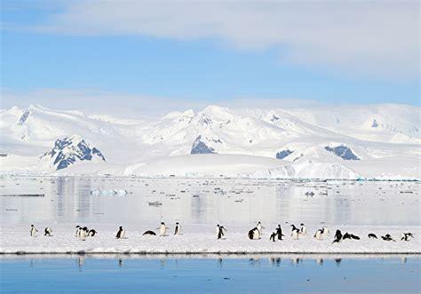 princess cruises polar online polar regions cruises book your polar regions cruise today