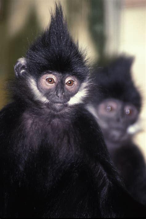 monkey and primates and monkeys page 3 oregon zoo