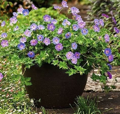 Flowers For Window Boxes Partial Shade - 1000 images about diy window boxes on pinterest hanging basket plants hanging baskets and flower