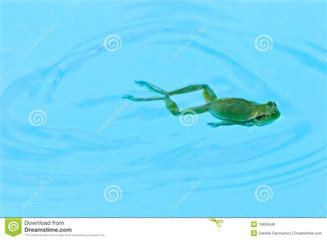 Frog swimming stock photo. Image of august, stroke, breast ...