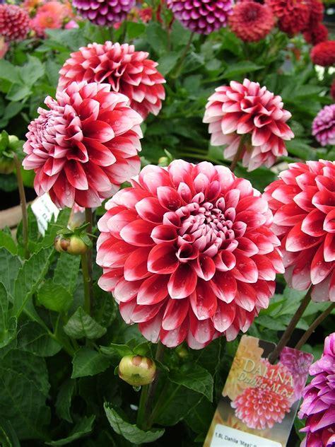 what kinds of flowers or plant do you like askmen
