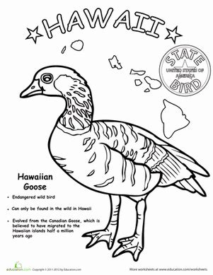 hawaiian birds coloring pages hawaii state bird worksheet education com