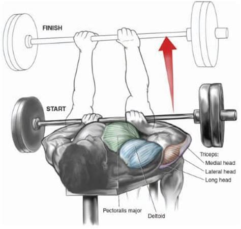 bench press muscles worked how to increase arm size by doing these compound exercises