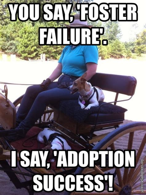 Adoption Meme - jack russell rescue memes georgia jack russell rescue