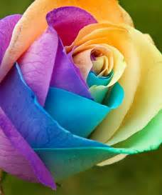 multi colored roses multi colored roses flowers images