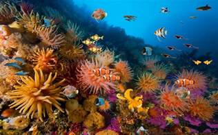 coral reef free live wallpaper android apps on google play