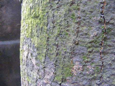 definition boat bark bark 뜻 영어 사전 bark 의미 해석