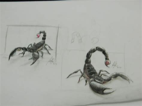 scorpion realistic by luizlope5 on deviantart