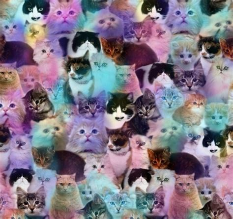 cat wallpaper collage image 1955916 by maria d on favim com