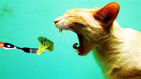 cat eating wallpaper high resolution wallpaper creative animal digital art