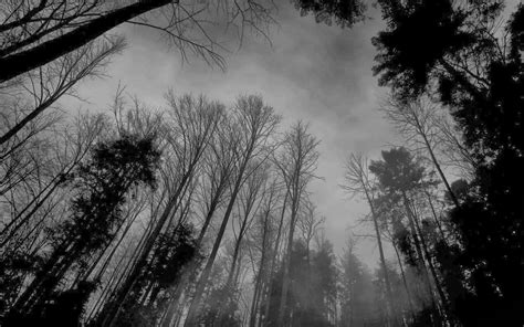 black and white woodland wallpaper forest wallpaper black and white