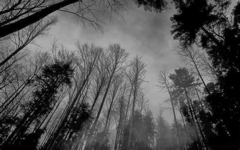 imagenes tumblr black and white black and white forest wallpaper wallpapersafari