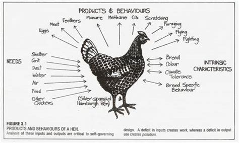 how do chickens mate diagram a report on zeri course zero emissions research