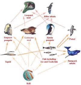 woodland food web
