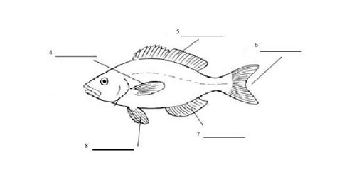 a diagram of a fish fish parts diagram fish free engine image for user
