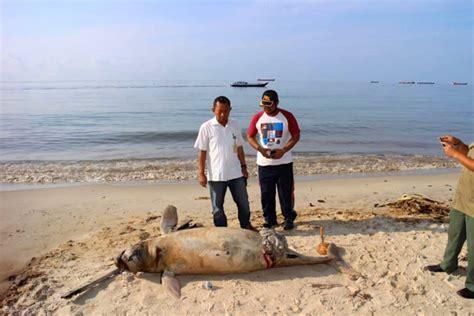 Minyak Ikan Hiu Di Apotek opini penanggulangan dan langkah hukum pada kasus tumpahan minyak di teluk balikpapan