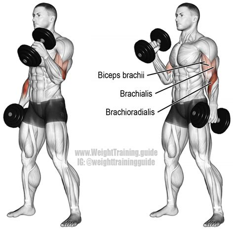 dumbbell swing bodybuilding dumbbell hammer curl exercise guide and video weight