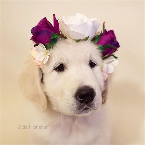 puppy flower 17 best images about golden retriever on watercolors puppys and